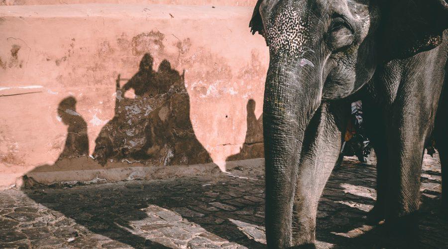 Indien Jaipur Amber individuel rejse