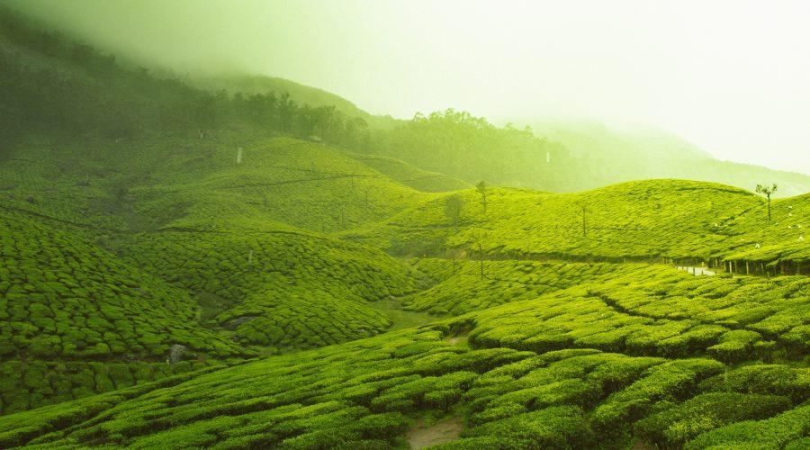Indien Munnar individuel rejse
