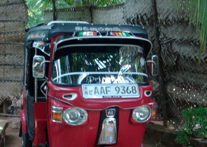Sri Lanka indivduel rejse