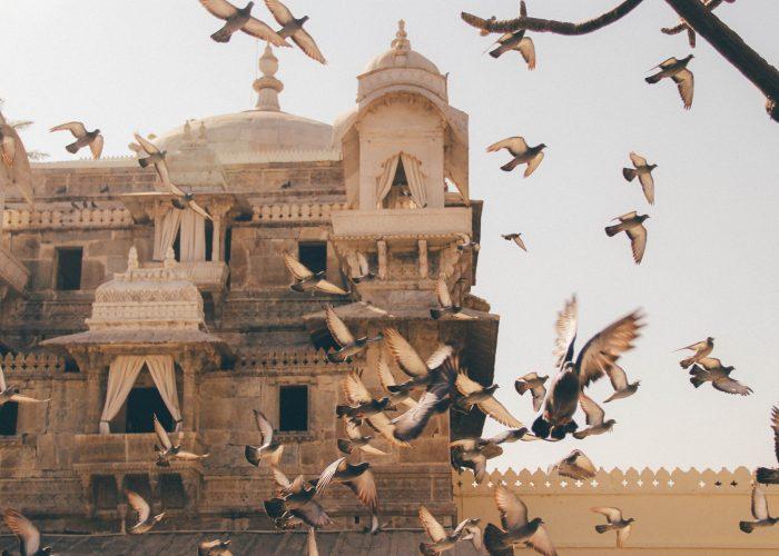 MAKANNE eventyrlig kunstnerresidens i Udaipur Rejser til Indien